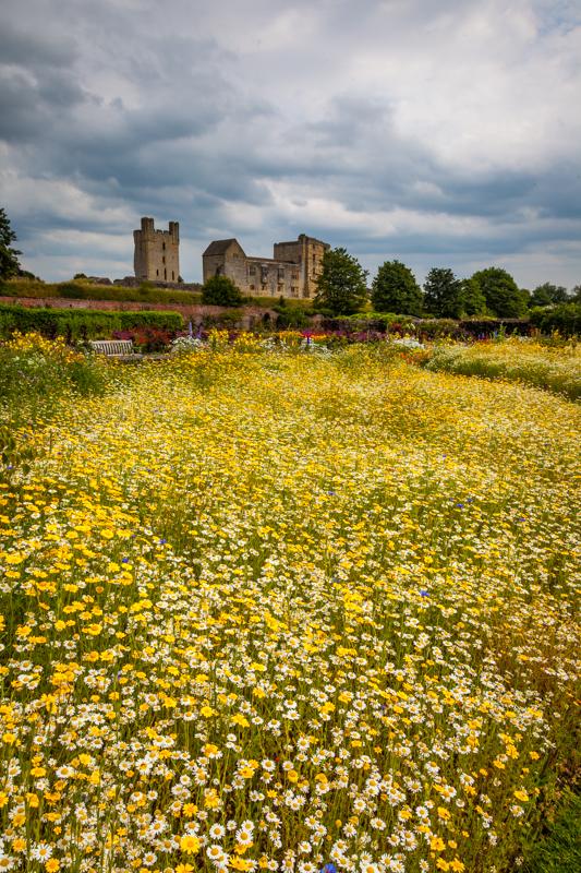 Wild Flower Meadow Helmsley Walled Garden