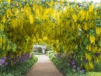 Laburnum Arch Helmsley Walled Garden