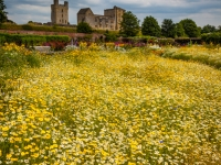 Wild Flower Meadow Helmsley Walled Garden